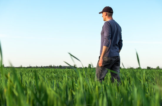 Handsome farmer. Young man walking in green field. Spring agriculture.