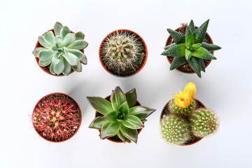 Different cacti and succulents on white background, top view