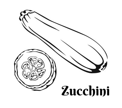 zucchini outline. Black and white icon of  whole vegetable and slice. Vector monochrome illustration.