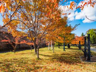 Garden Poster 秋の公園のベンチ 北海道小樽市色内「運河公園」