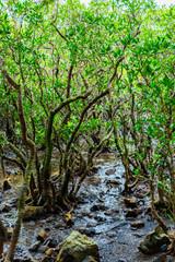 奄美大島マングローブ国立公園特別保護地区
