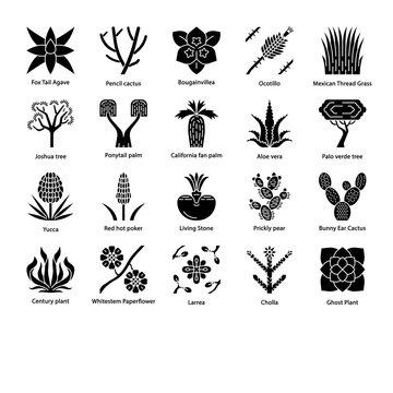 Desert plants glyph icons set