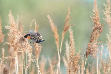 Ptak, podróżniczek