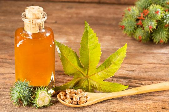 Beans and castor oil - Ricinus communis