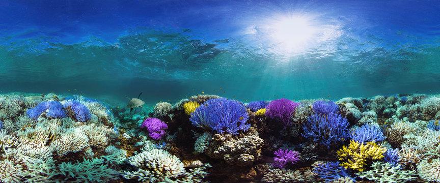 Glowing coral reef