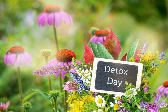 Schild Detoc Day mit Heilkräutern und Pflanzen für Tees