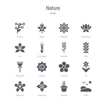 set of 16 vector icons such as hills, hyacinth, hydrangea, hypericum, iris, jasmine, jonquil, knapweed from nature concept. can be used for web, logo, ui\u002fux