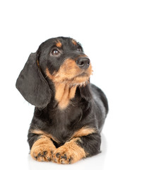 Spoed Fotobehang Hond Dachshund puppy lying in front view and looking away and up. isolated on white background