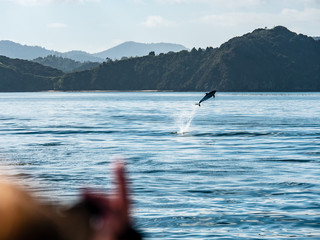 Flying Dolphin at Bay of Islands New Zealand