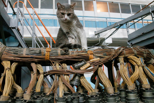 A cat sits inside a flight test facility at the Antonov aircraft plant in Kiev