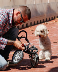 Owner fixes cart for double amputee dog in Washington