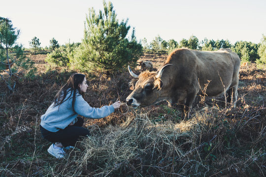 teenager feeding grass to a cow
