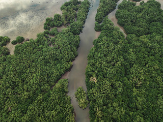 Aerial view of the mangrove forest