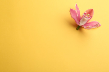 Beautiful tropical orchid flower on color background, top view. Space for text