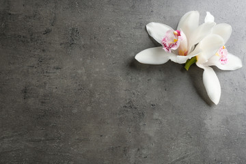 Beautiful tropical orchid flowers on grey background, flat lay. Space for text