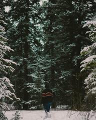 man facing tall pine trees