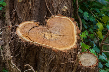 Zeichen der Liebe, Herz im Baum
