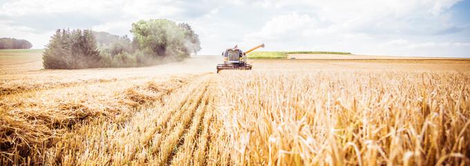 Combine harvester harvests ripe wheat. agriculture  Fototapete