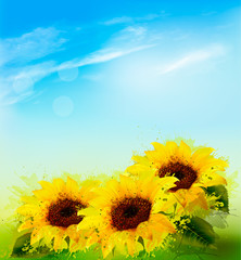 Wall Mural - Nature background with sunflowers and blue sky. Vector