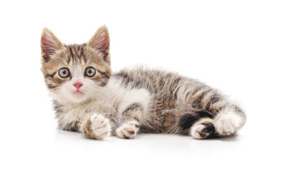 One striped kitten.
