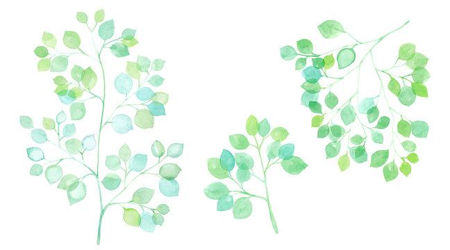 木漏れ日 枝葉の水彩イラスト