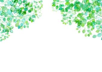 木漏れ日 新緑のフレーム背景