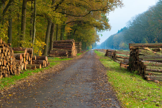 wood logging in the netherlands