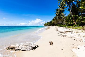 Vibrant tropical beach on Samoa Island with coconut palm trees and black rocks