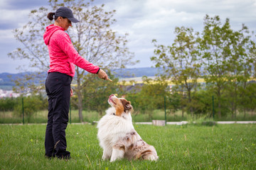 Animal trainer giving snack reward to dog after training. Woman and Australian shepherd