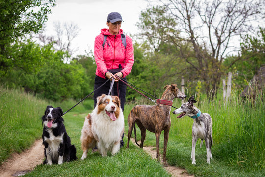 Professional dog walker with four dogs outdoors