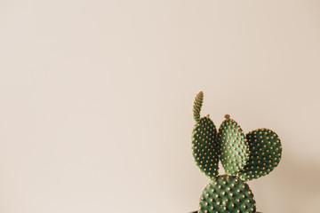 Fotobehang Cactus Closeup of cactus on beige background. Minimal floral composition.