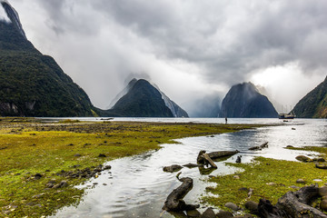 Milford Sound fjord shore