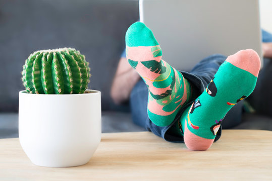 A man in crazy multi-coloured socks with feet and a cactus on table. Man working on a laptop computer at home