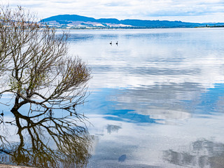 The crystal clear waters of Hamurana Springs, Rotorua, New Zealand