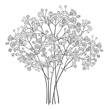 Bouquet of outline Gypsophila or Baby's breath flower bunch and bud in black isolated on white background.