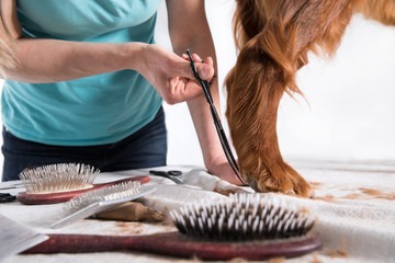 grooming at the salon for dogs