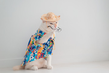 Funny cat going on vacation,wear beach shirt and hat in summer concept .