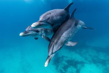 Foto op Aluminium Dolfijn Delfine beim spielen