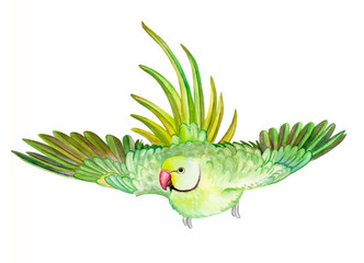 Rose-ringed parakeet. ring-necked parakeet. Green parrot isolated on white background. Watercolor. Illustration. Template. Hand drawing. Clipart