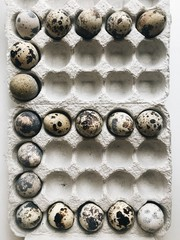 """Letter """"""""E"""""""" made with quail eggs in a container"""