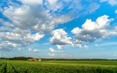 Big sky over a farm potato field in rural Prince Edward Island, Canada...