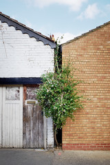 A tree struggles for growth between two buildings