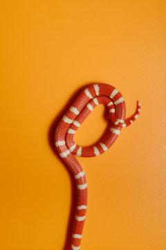 Shy snake