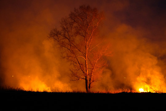 Intense flames from a massive forest fire.