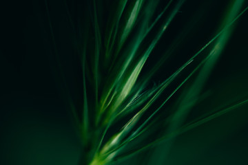 Abstract textures of green flowers and plants from nature