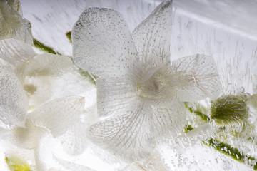 Weiße Orchidee in kristallklarem Eis 4
