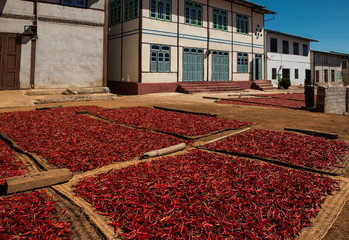 Chilli production in Myanmar