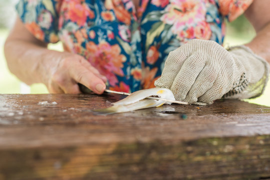 senior woman filleting fish with a steel glove