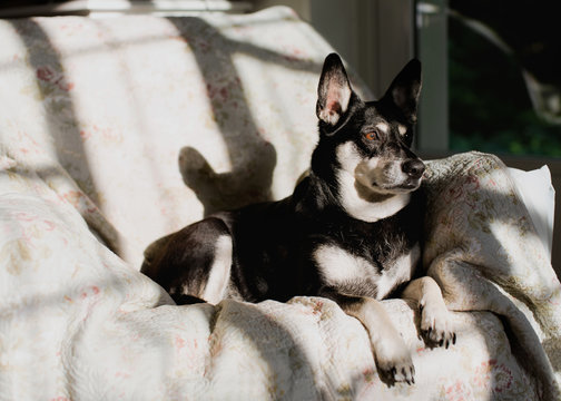Dog at home relaxes in living room in sunshine