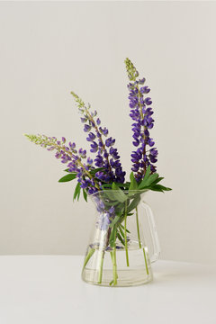 Lupins in a glass vase